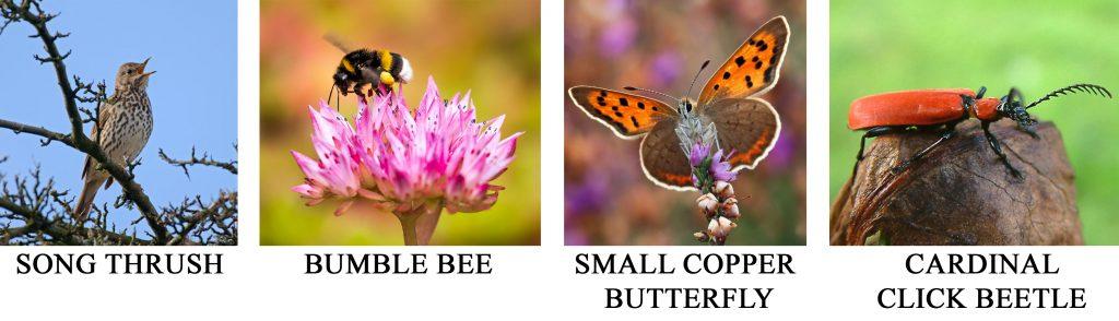Increased Biodiversity